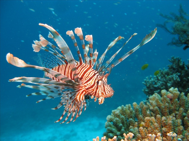 The 25+ best Marine plants ideas on Pinterest | Marine ... |Ocean Life Plant Caribbean