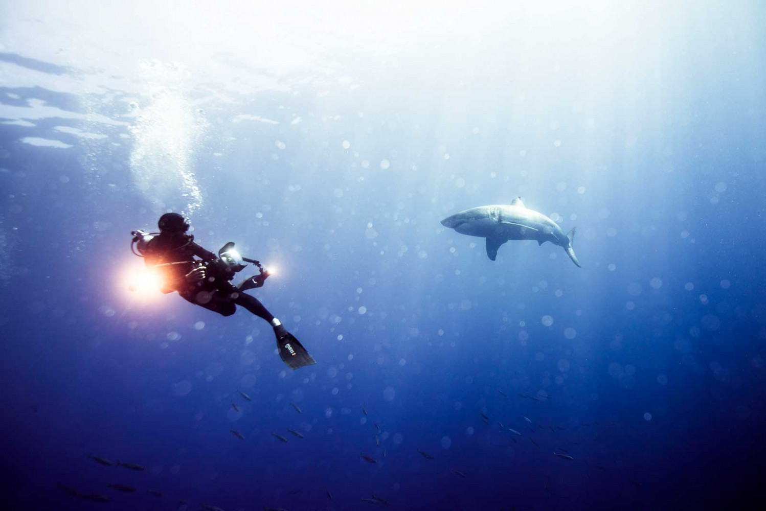 Michael Muller photographing sharks in the wild