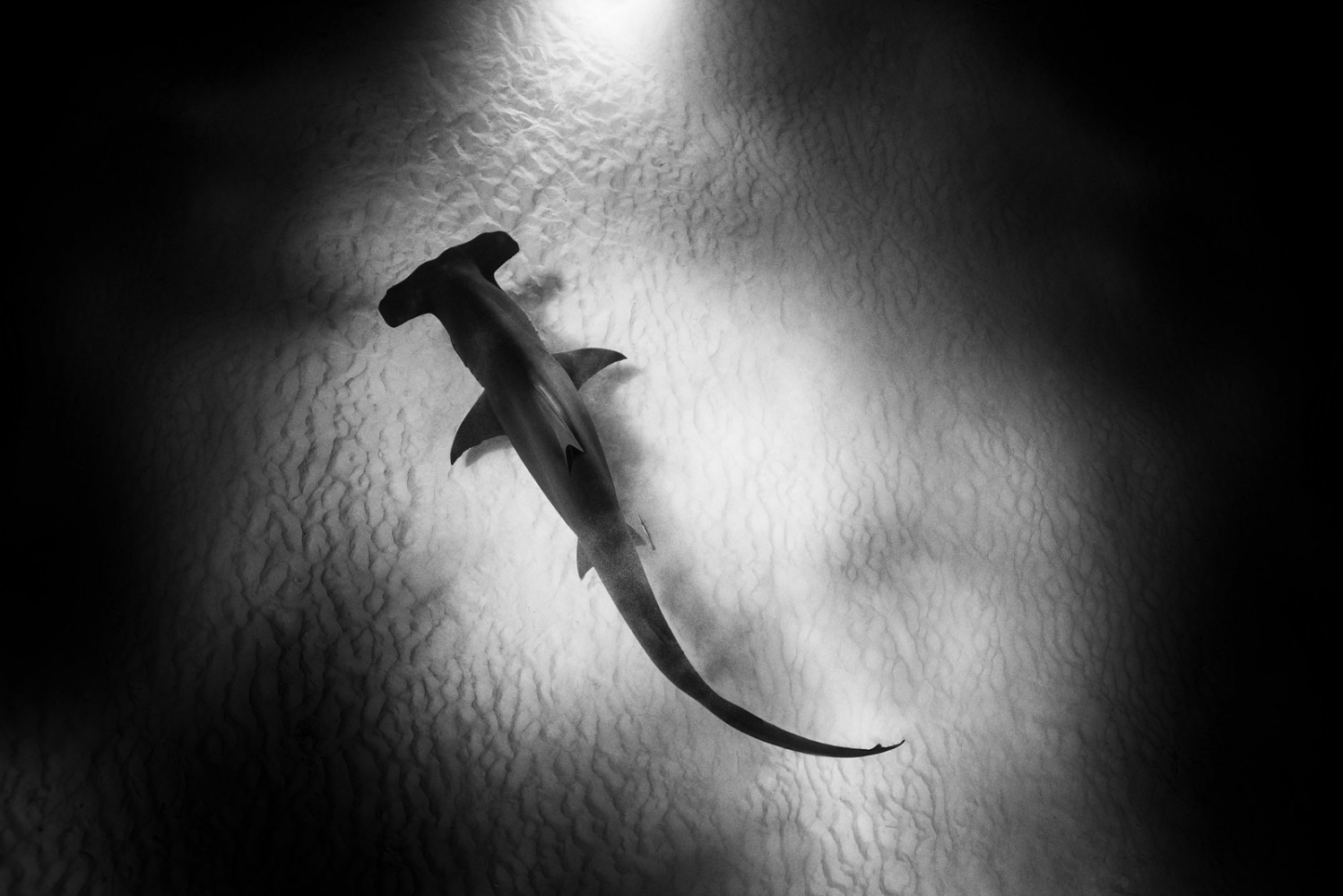 Michael Muller's POV from above these massive sharks