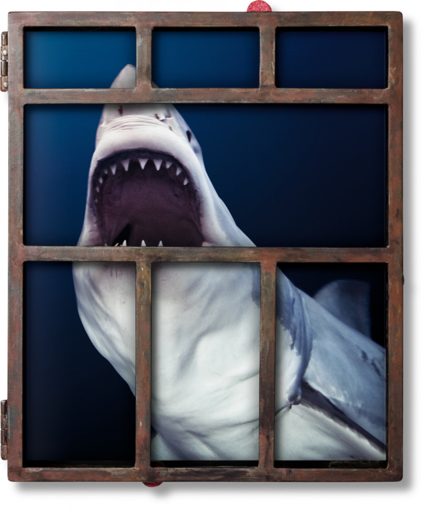 Michael Muller's Sharks Collector's Edition presented in a bite-proof metal shark cage.